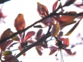 Brushed_Spring_BerryTree_web