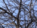 Brushed_winter_Oak_web