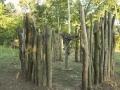 Curatorial_CAbin_Eric_tree2