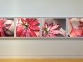 flowerGirl_PassionFlowerinstal_web