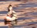 Video_NowPainter_dusk